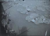 Monet, autoportrait à la surface du bassin aux nymphéas (vers 1905) ©Collection Philippe Piguet
